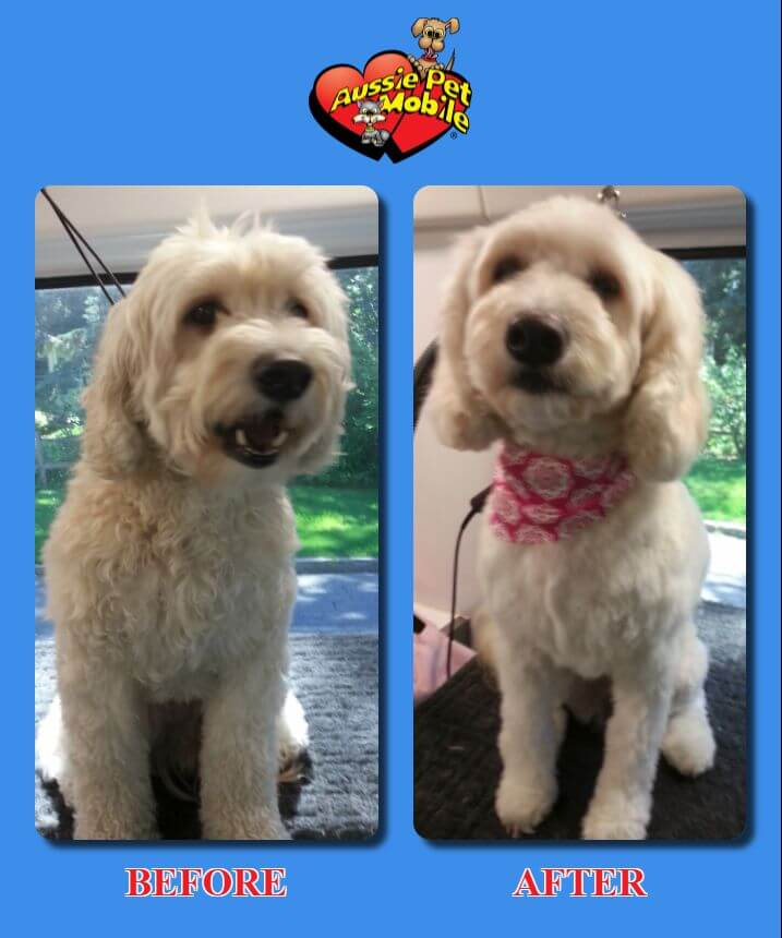 Mobile Dog Grooming Stamford Ct