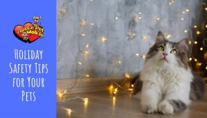 Holiday Safety Tips for Your Pets Dec 2020